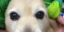 Yarn Pups